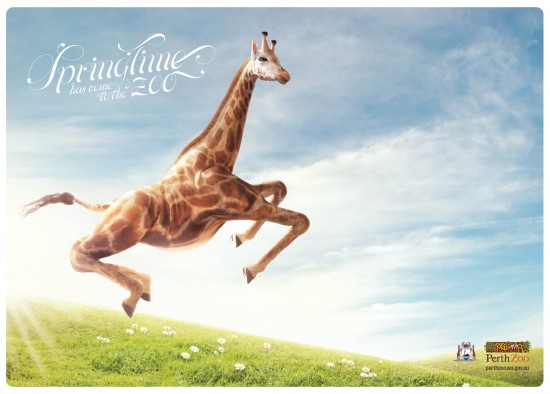 Print Advertisements with Animals (5)